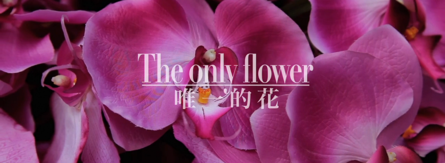 THE ONLY FLOWER